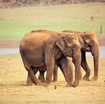 The stylish elephant