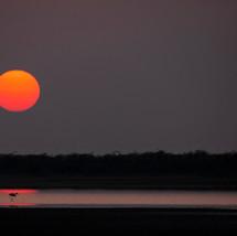 Flamingo enjoying Sunset