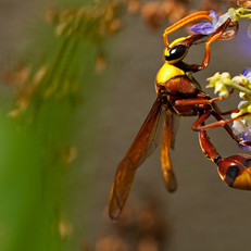A wasp with vivid colors