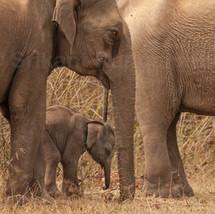 tired-baby-elephant.jpg