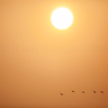 A long day's work for these migratory birds