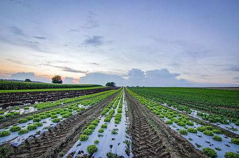 clouds-cropland-crops-1443867.jpg