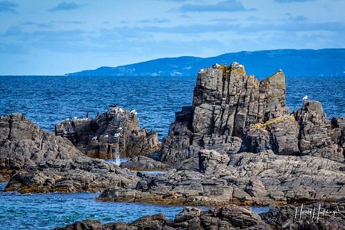 """Life On The Rocks"" at Broad Cove, Newfoundland."