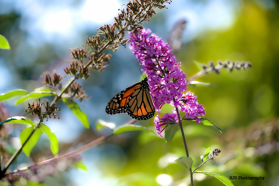 Butterfly at the Niagara Parks Botanical Gardens in Niagara Falls