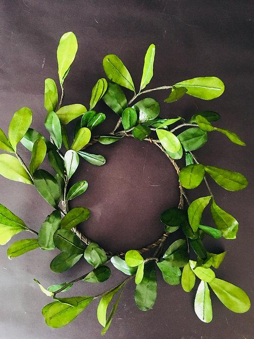 Eucalyptus Rings