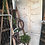 Thumbnail: 6 Ft Rustic Ladder