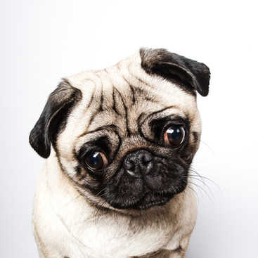 Pet Portrait Photography-41.jpg
