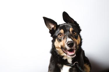 Pet Portrait Photography-51.jpg
