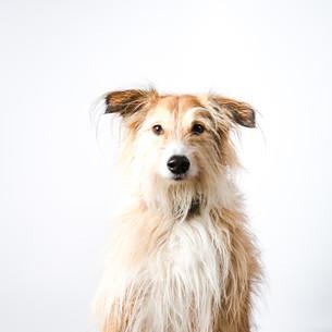 Pet Portrait Photography-45.jpg