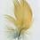 Thumbnail: Taylor Curry Feather Framed Prints