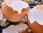 egg-shells.jpg
