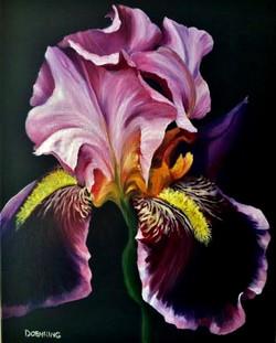 Iris in the Dark
