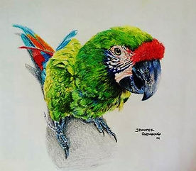 art lessons, art classes, san marcos, parrot, pencil drawing