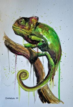 chameleon (SOLD)