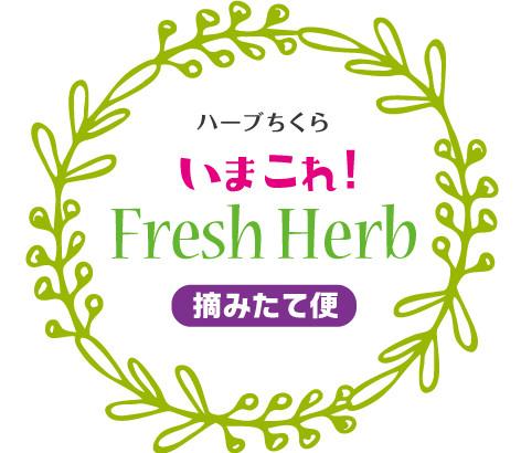 今これ!Fresh Herb『摘みたて便』はじめます