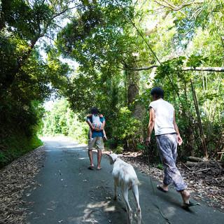 里山の散歩道