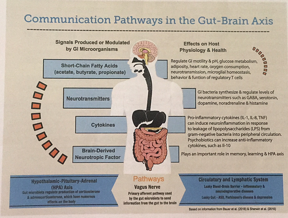 Communication Pathways in the GUT-Brain Axis- Probiotics