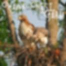 Hawk Nest Farm.png