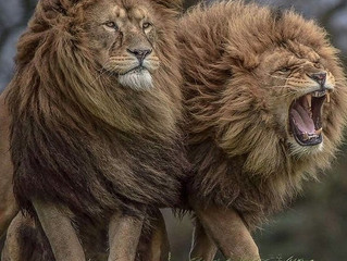 Tribe of Judah Stand Together