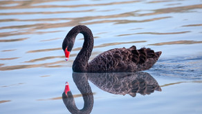 TWO BLACK SWANS – Today's Market Threats