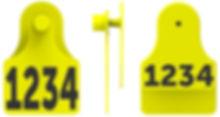 F3M2 Combo.jpg