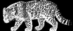 Jaguarsinfondo.png