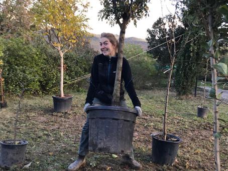 Creazione del giardino-foresta. Fase 2: piantare alberi e arbusti