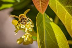 Welcome Pollinators!