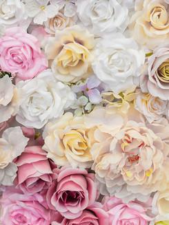 beautiful-background-white-pink-roses.jpg