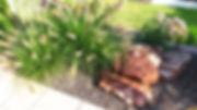 Pflanzen.jpg