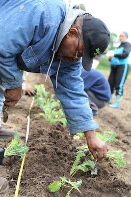Volunteer On Farm, June 13-19 (PM)