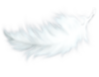 feather transparent from pluspng_edited.