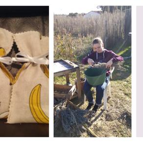 Récolte de lavande 2019 prête !