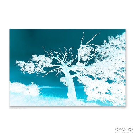 blue spectrum - oak