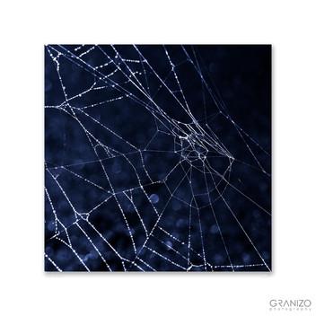 The Web I