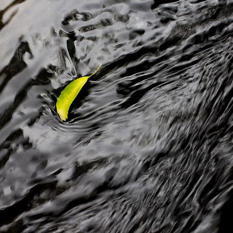 River Leaf