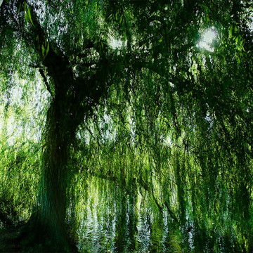 Willows of Wallingford