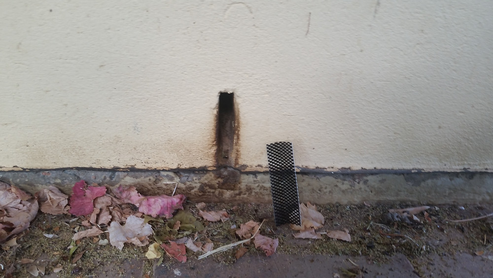 Greasy weep hole where mice have been entering into wall cavity