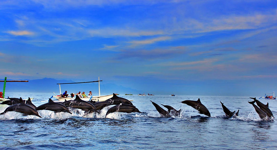Image result for pulau pemanggil dolphin