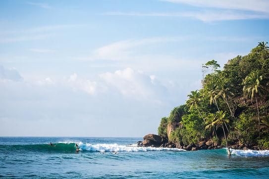 Sri Lankan waves and jungle