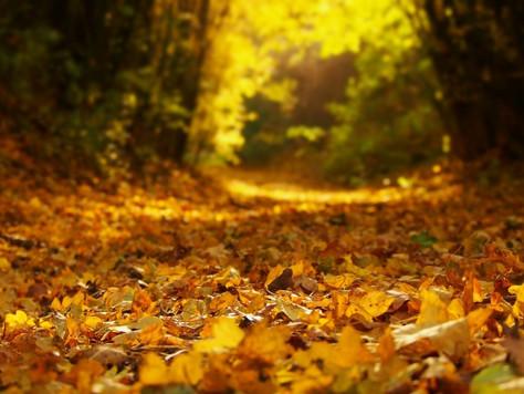 QPAPA愛分享:秋Autumn