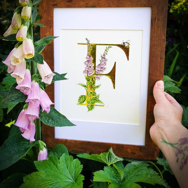 Foxgloves F.jpg