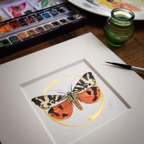 Jersey Tiger Moth 1 (1 of 1).jpg