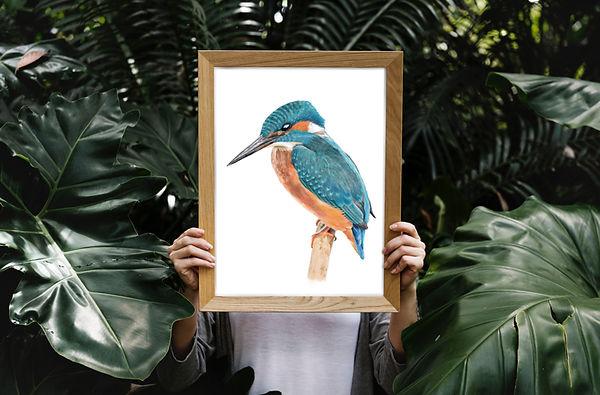 kingfisher small.jpg