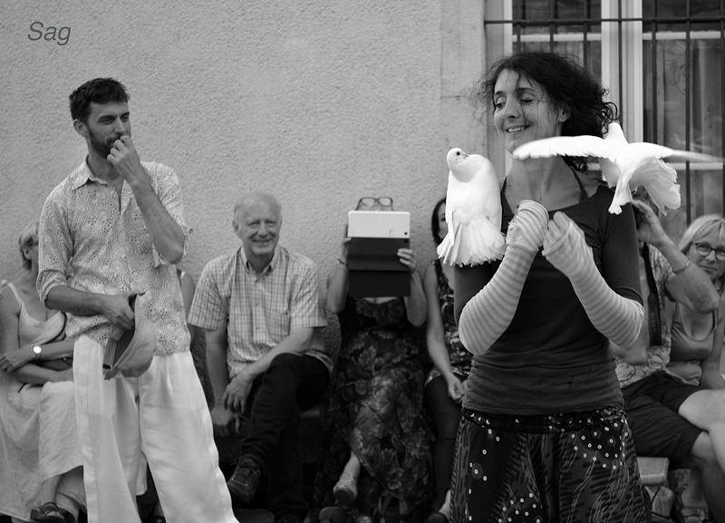 oiseaux festivalito
