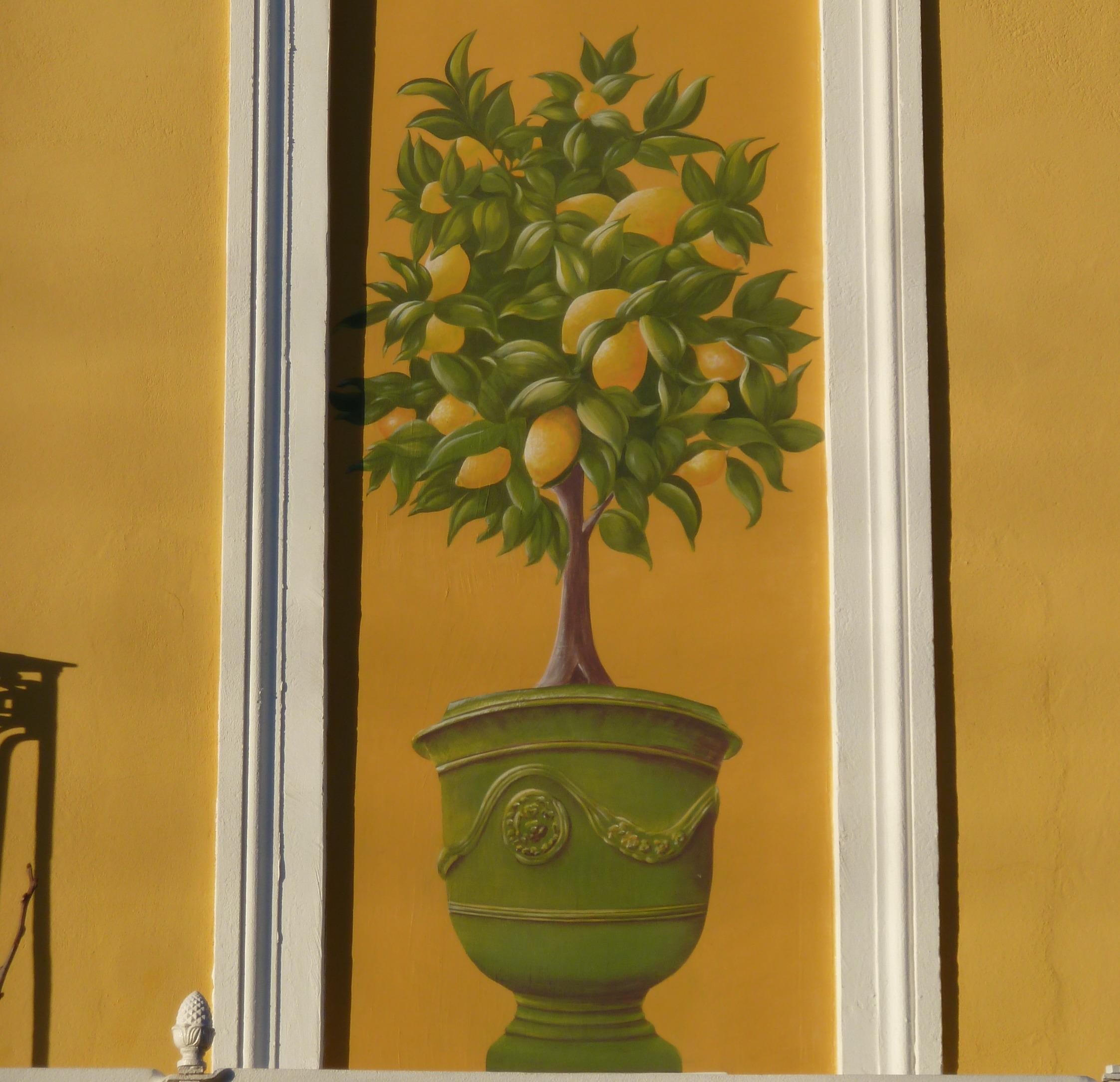 peinture murale citronnier