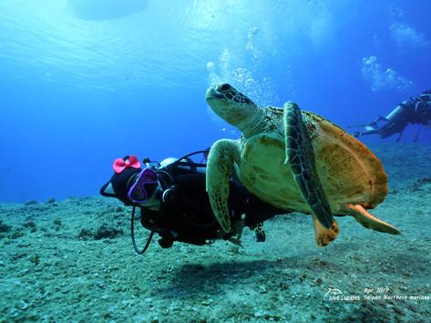 다이브루덴스의 사이판 다이빙 여행일지 #2 - 티니안, 덤프코브, 그로토 (Tinian, Dump cove, Grotto)