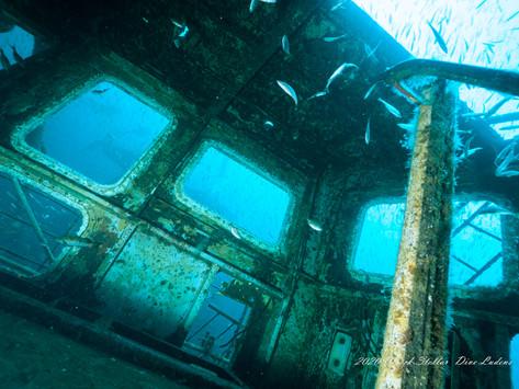 [2020년 10월] 강릉 수중공원 스텔라 엠버 침선 난파선 다이빙