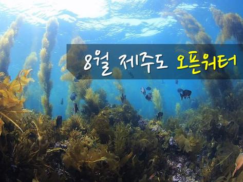 [투어공지] 8월 자유일정 제주도 다이빙투어 (오픈워터, 어드밴스 해양실습 가능)