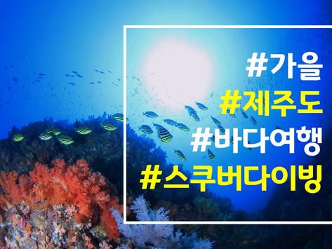 [2019 9월] 제주도 다이빙 투어 / Deep Diving 교육진행 안내
